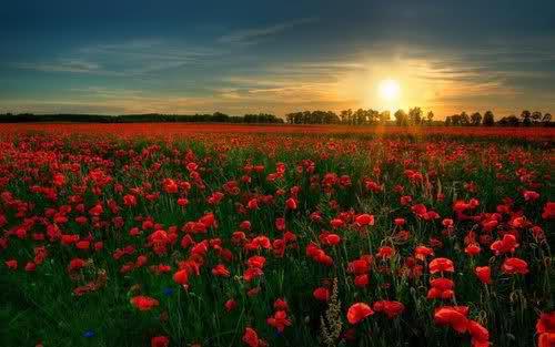 Bild från http://weheartit.com/entry/27392547/