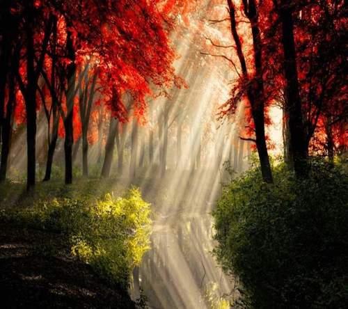 Bild från http://weheartit.com/entry/86261280